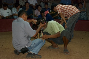 Cock Fight Northeast Thailand