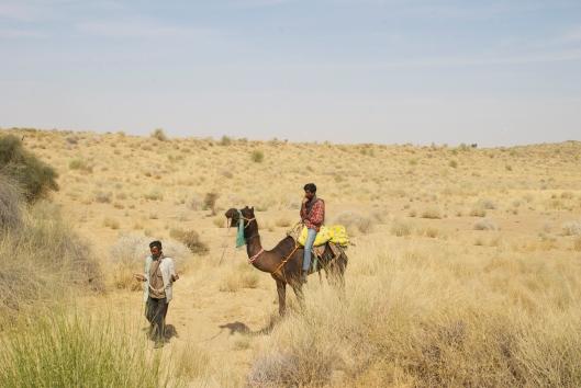 India camel safari jaisalmer