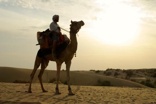 camel at sunset jaisalmer